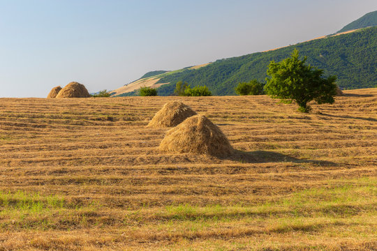 Rows of dry hay in the mountains
