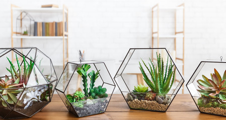 Indoor plants in florarium vases in row on table