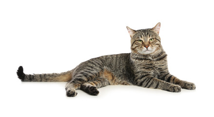 Cute tabby cat isolated on white. Friendly pet Fototapete