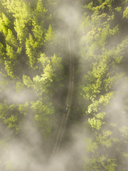 misty forest drive drone photography