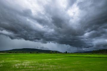Rain Clouds Over Rice Field Fotobehang