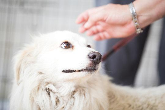 Scared white dog .Adopt a pet