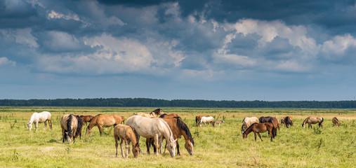 Photo sur Plexiglas Chevaux Herd of horses grazing on the field.