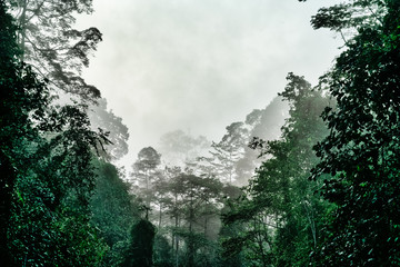 Tropical jungle in morning light and fog