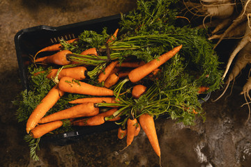 Bunch of radish and carrot in tray