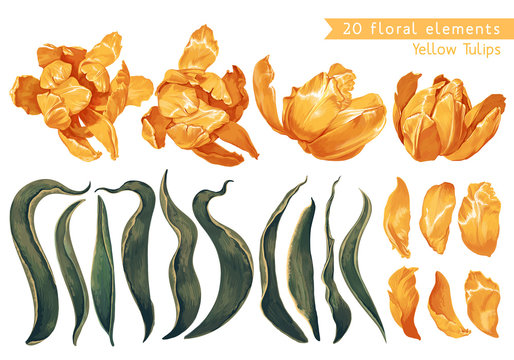 Set of floral elements with yellow tulips flowers and leaves for your design, posters, cards, prints for clothing, wallpaper, wrapping paper, wedding invitation, patterns, wallpapers, fabric.