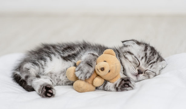 Baby kitten sleeping with toy bear on pillow at home