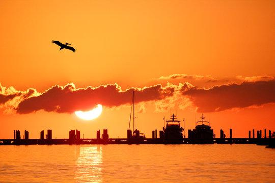 USA. Florida. The Keys. Marathon Island. Sunset from the marina. Pelican.
