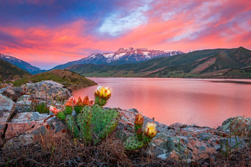 Fiery summer sunset with a cactus flower and a lake, Utah, USA.