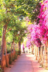 Beautiful narrow stone alley with tropical plants and bright red flowers in summer at resort of...