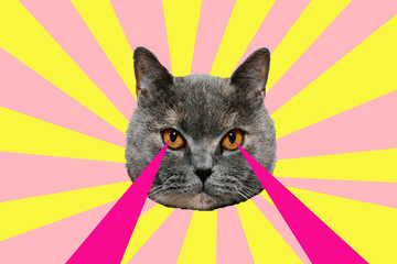 Animal art collage. Cat with lasers from eyes,