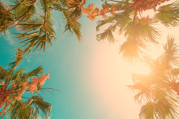 Palm tree crowns with green leaves on sunny sky background. Coco palm tree tops - view from the ground. Palm leaf on sunny sky. Summer travel banner. Exotic island nature image