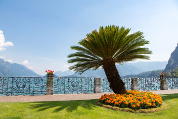 Palm tree and orange flowers on the shore of Lake Como, Italy