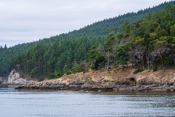 Hillside covered in evergreen and madrone trees above a rocky shore, calm sea and overcast sky, as a background, San Juan Islands