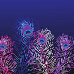 Lovely background of multicolored peacock feathers