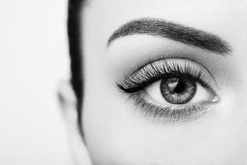 Wall Mural - Female Eye with Extreme Long False Eyelashes. Eyelash Extensions. Makeup, Cosmetics, Beauty. Close up, Macro