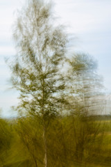 Keuken foto achterwand Bos in mist Abstract intentional motion blured photo of trees and vegetation during early summer