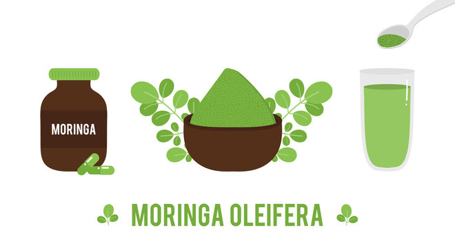 Vector set, collection of moringa oleifera leaves, powder, food supplement, pills isolated on white background for trendy superfood design.