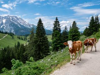 Kühe in den Berchtesgadener Alpen Wall mural