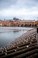Prague Winter Markets River