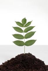 Kleine Pflanze in einem Erdhaufen , symbolisch für Wachstum