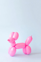 Balloon in the form of a dog on a blue background.