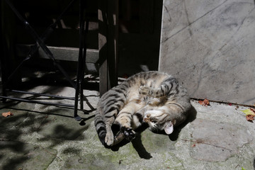 Ninja, six years old cat, enjoys the sun at a Paris courtyard as temperatures continue to soar in most of the country