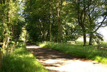 country track in forest, Greenlaw, scotland in summer