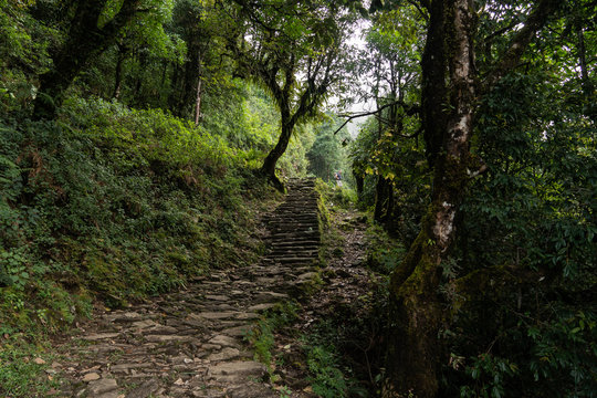 Nepal, Annapurna. Mardi Himal trek. tropical forest