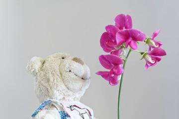 Teddy schnuppert an Blüten