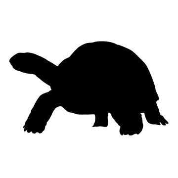 Aldabra Giant Tortoises Silhouette Vector