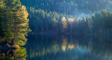 Morning light shining on autumn golden trees at a  forest lake