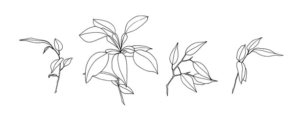 Set of hand drawn outline leaves. Plant painting by ink. Sketch botanical vector illustration. Black isolated herb on white background