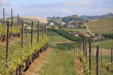 vineyard and rural landscape in Piedmont region, Italy