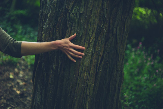 Hand of young woman touching a tree