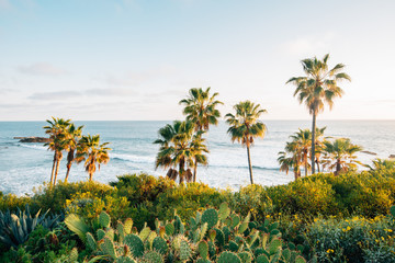 Photo sur Plexiglas Palmier Cactus and palm trees at Heisler Park, in Laguna Beach, Orange County, California
