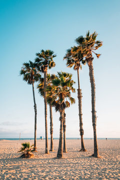 Palm trees on the beach in Santa Monica, Los Angeles, California