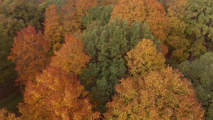 Wall Mural - Epic Flight Over Autumn Forrest. Colorful Trees Drone Aerial.