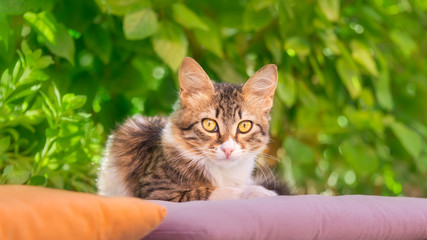 Cute young cat, brown tabby with white, resting lazy on a pillow in front of green bushes and watching curiously with yellow eyes, Rhodes, Greece