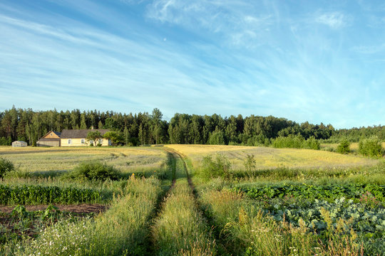 Vegetables growing in permaculture garden, traditional countryside landscape
