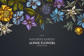 Floral design on dark background with bellflower, edelweiss, globethistle, globeflower, meadow geranium, gentiana