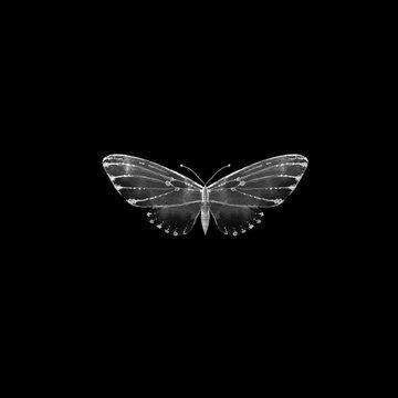 Hand drawn illustration of moth on black background