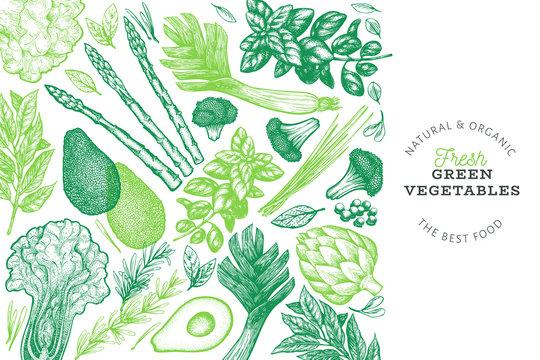Green vegetables design template. Hand drawn vector food illustration. Engraved style vegetable frame. Retro botanical banner.