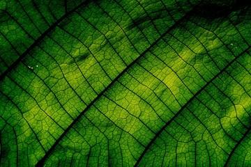 Macro shot, Green leaf texture.