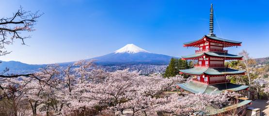 新倉山浅間公園 満開の桜と富士山 パノラマ