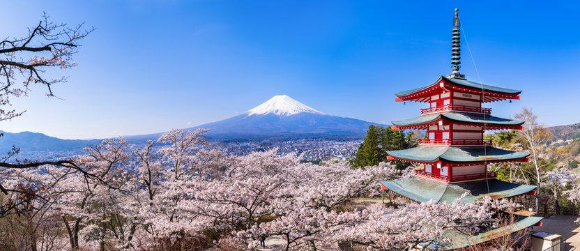 """新倉山浅間公園 満開の桜と富士山 高解像度パノラマ / Scenery of """"Arakurayama Sengen Park"""" where the cherry blossoms are in full bloom. Mt. Fuji, cherry blossoms, and a red five-storied pagoda. High resolution panoramic photo."""