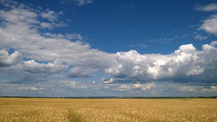 Poster Taupe Wheat field under blue cloudy sky in Ukraine