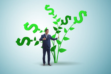 Money tree concept with businessman in growing profits