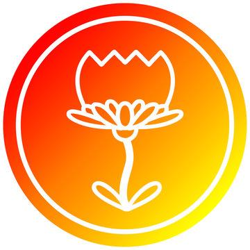 lotus flower circular in hot gradient spectrum