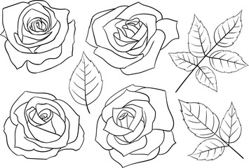 Set of hand-drawn linear roses and leaves.
